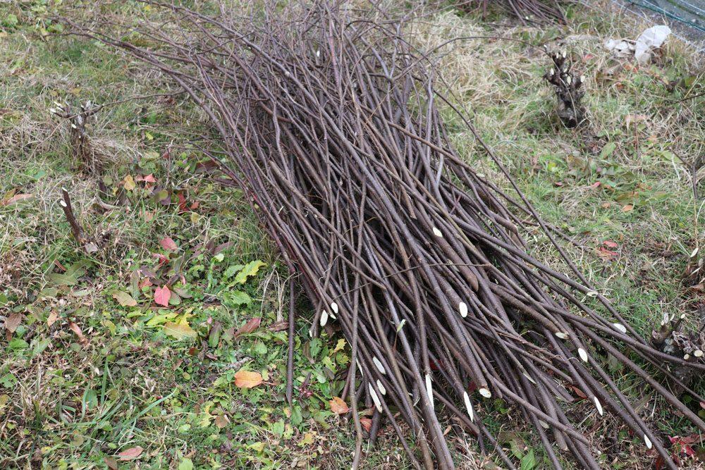 刈り取った枝