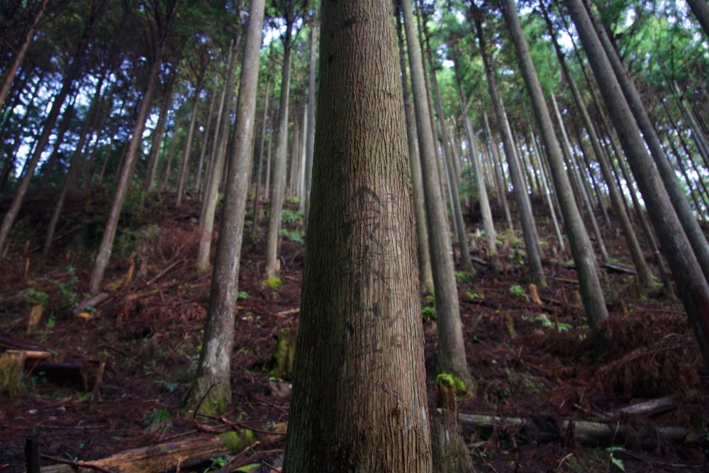 手入れされた木々。どの山守が管理しているか印を残す。