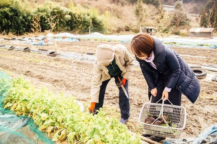 農作業のお手伝い